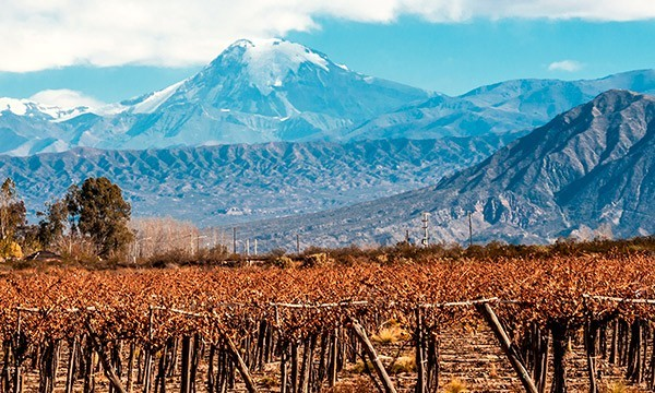 Mendoza - Mountains and Wineries
